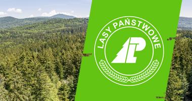 Lasy Państwowe — legalny bushcraft i survival